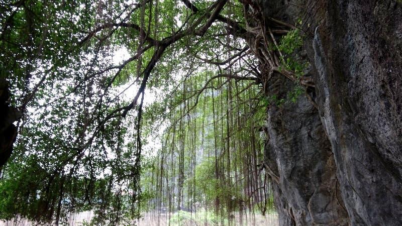 Интенсивная витальность деревца скалы стоковое фото