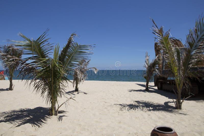 Интенсивная витальность кокосовых пальм на солнечном песчаном пляже стоковые фото
