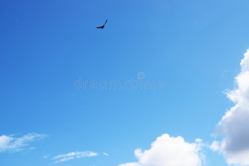 Интенсивное и красивое голубое небо с облаками и птицей стоковое фото
