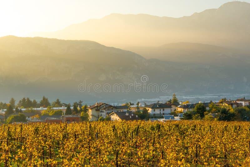 Интенсивный заход солнца над виноградниками, мглистый заход солнца осени стоковые фотографии rf