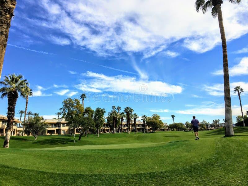 Интересный взгляд игрока в гольф идя к зеленому цвету окруженному очень высокорослыми пальмами на заднем плане на пустыне стоковое изображение