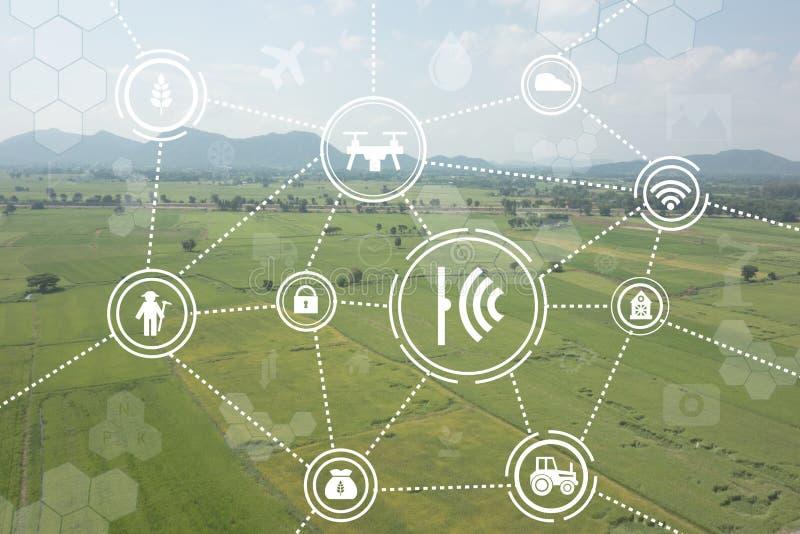 Интернет земледелия вещей промышленного, умных концепций сельского хозяйства стоковое изображение