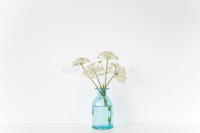 Интерьер лета крытый Прозрачная голубая ваза с букетом Aegopodium на таблице на белой предпосылке стоковое фото rf