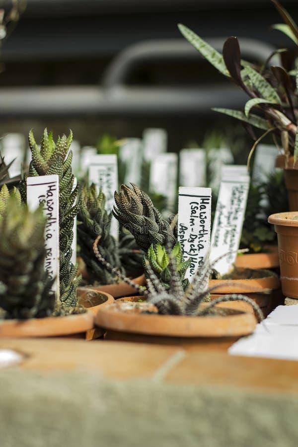 Интерьер парника для растущих заводов и кактуса Заводы рынка для продажи Много заводов в potss стоковые изображения rf