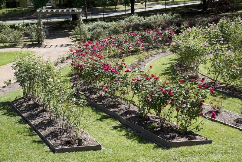 Интерьер розового парка в Тайлере стоковое изображение rf