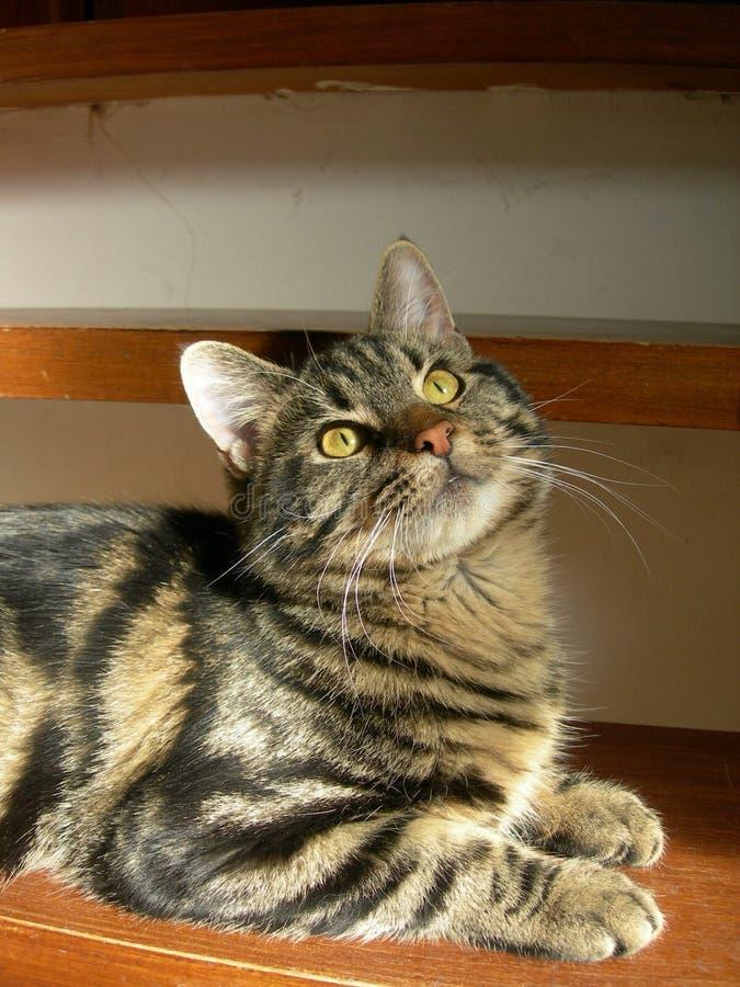 интригуя котенок стоковые фото