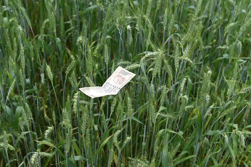 Индийские деньги в сочной зеленой ферме пшеницы, символе процветания стоковое изображение rf