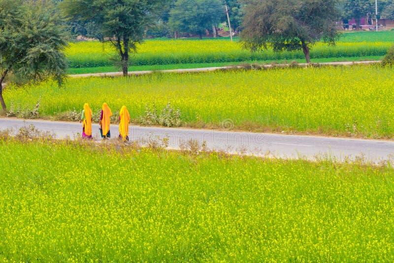 Индийские женщины на дороге деревни стоковые изображения