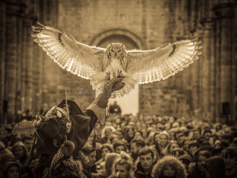 Индийский сыч орла с соколиным охотником стоковые фотографии rf