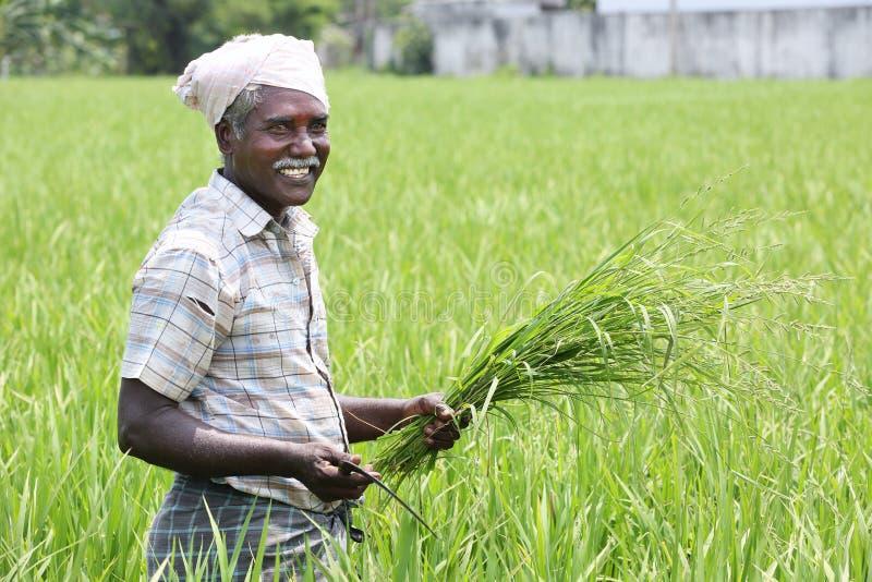 Индийский человек держа серп и урожаи стоковые изображения rf