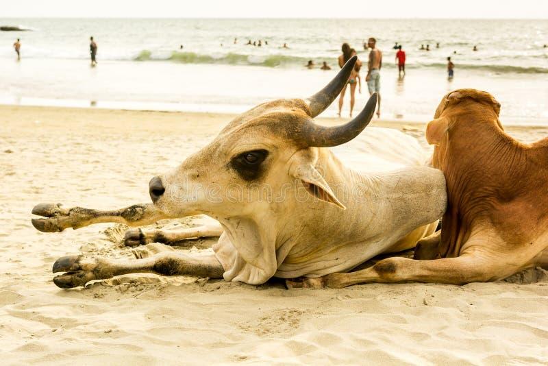 Индия, Goa, пляж Vagator стоковое фото