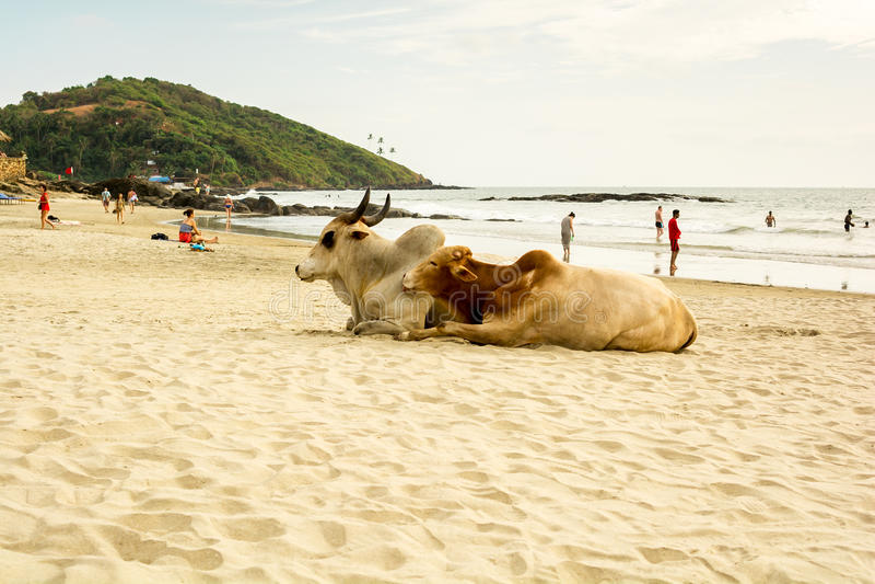 Индия, Goa, пляж Vagator стоковое фото rf