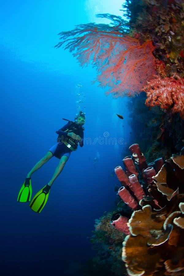 Индонезия стоковые изображения rf