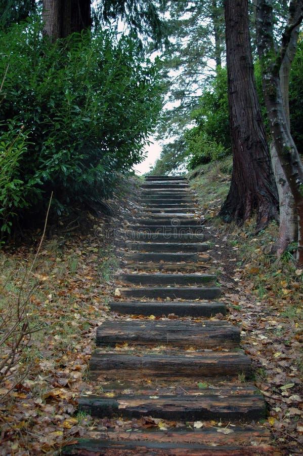 Ирландские шаги стоковая фотография