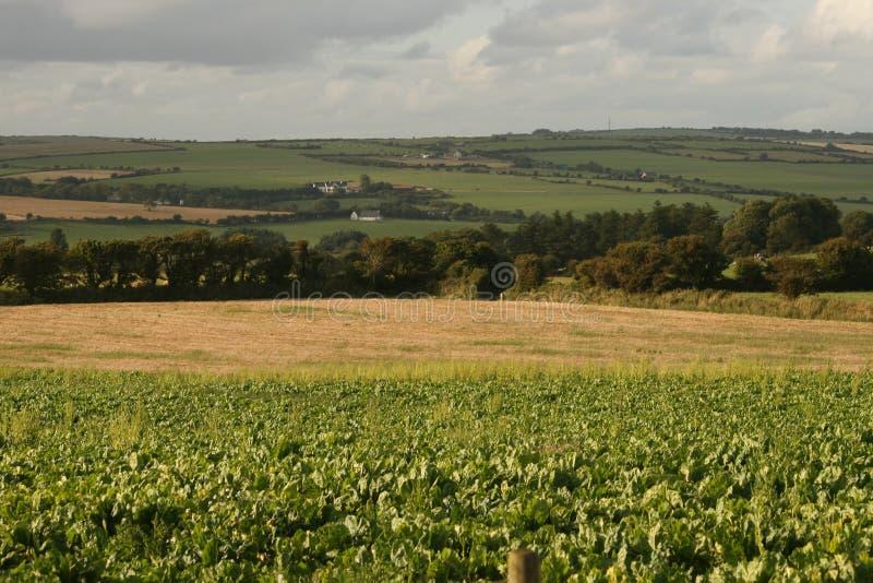 Ирландский пейзаж лета стоковые изображения rf