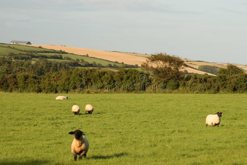 Ирландский пейзаж лета стоковые изображения