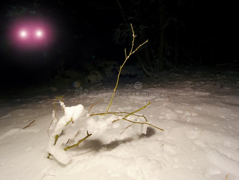 Искать туриста следов ноги исчезл в ноче зимы Света освещают снежный наклон лыжи стоковое фото