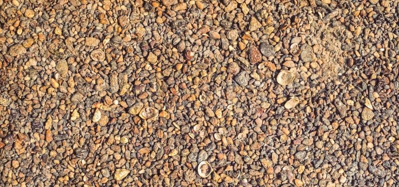 Ископаемая раковина на пляже песка стоковое фото