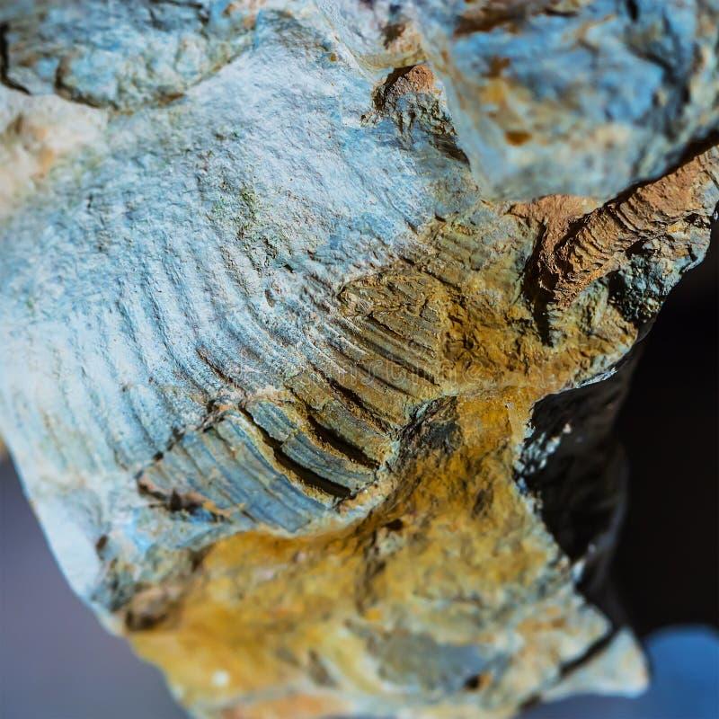 Ископаемые старого теплого моря Западный Сибирь, Россия стоковое фото