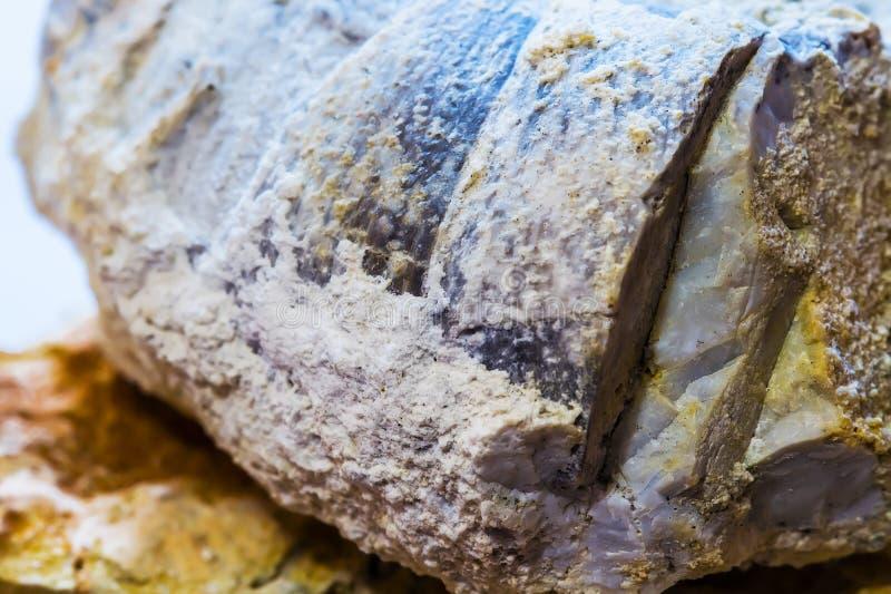 Ископаемые старого теплого моря Западный Сибирь, Россия стоковое изображение