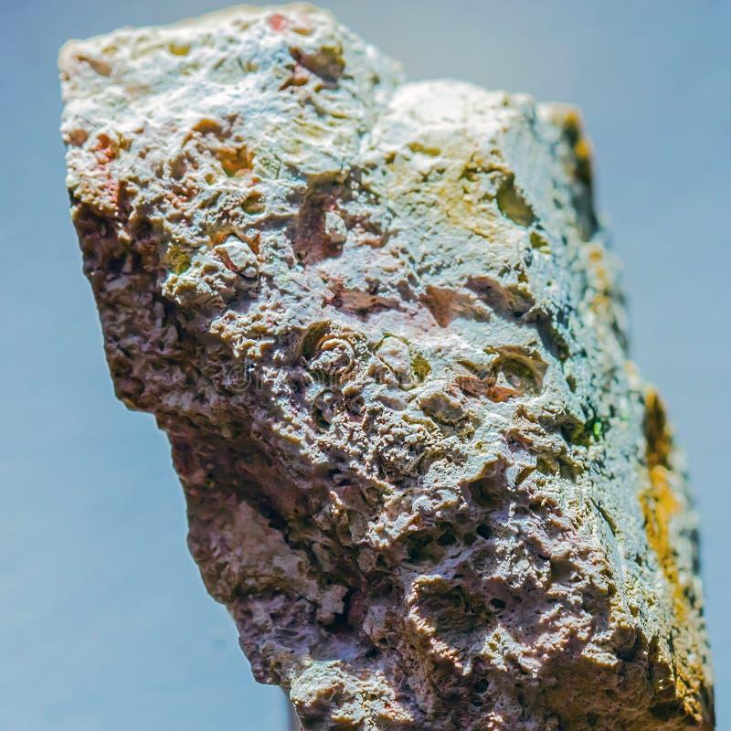 Ископаемые старого теплого моря Западный Сибирь, Россия стоковые фото