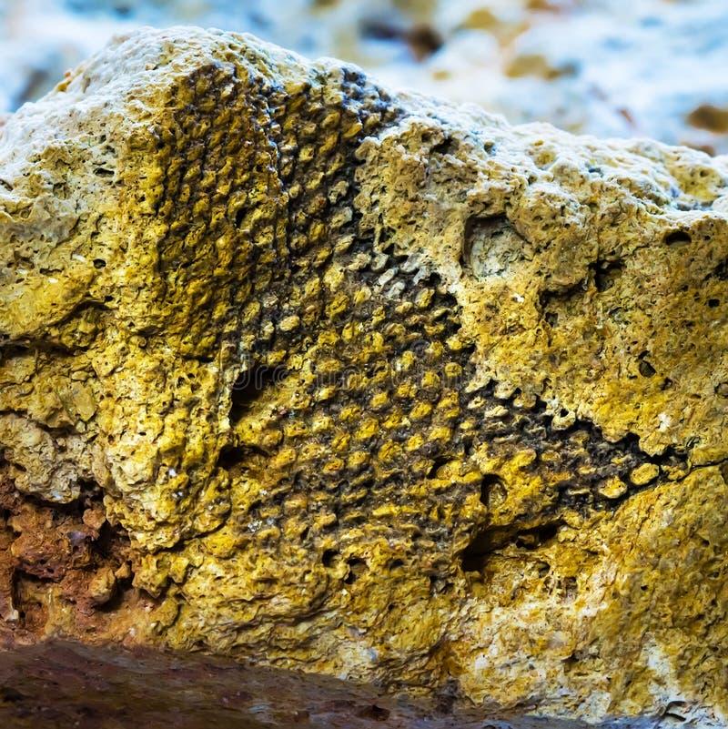 Ископаемые старого теплого моря Западный Сибирь, Россия стоковые фотографии rf