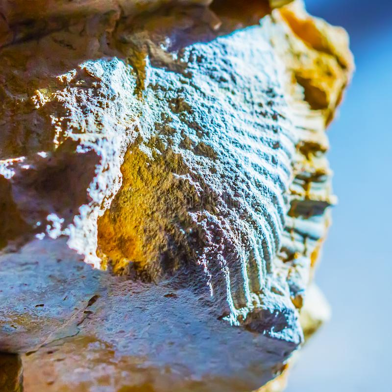 Ископаемые старого теплого моря Западный Сибирь, Россия стоковое изображение rf