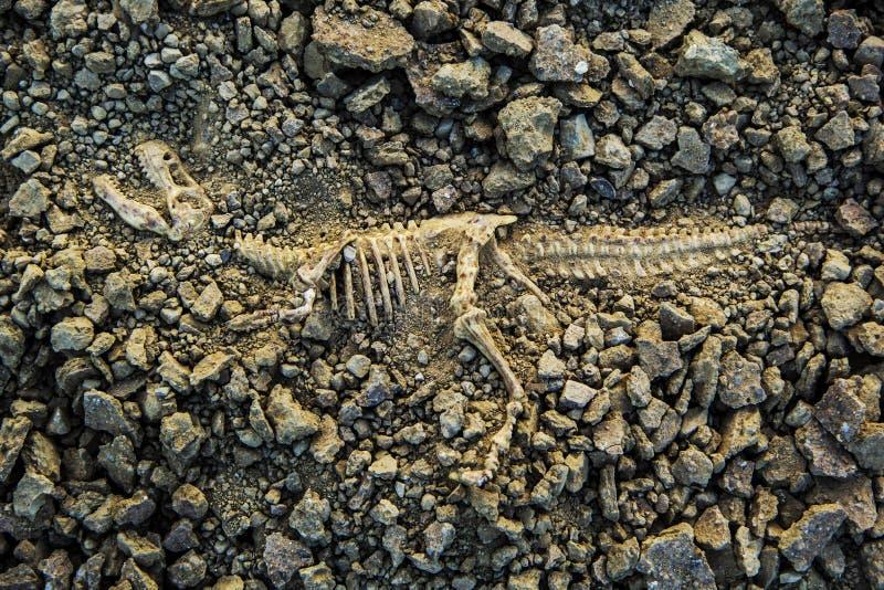 Ископаемый динозавр стоковые изображения