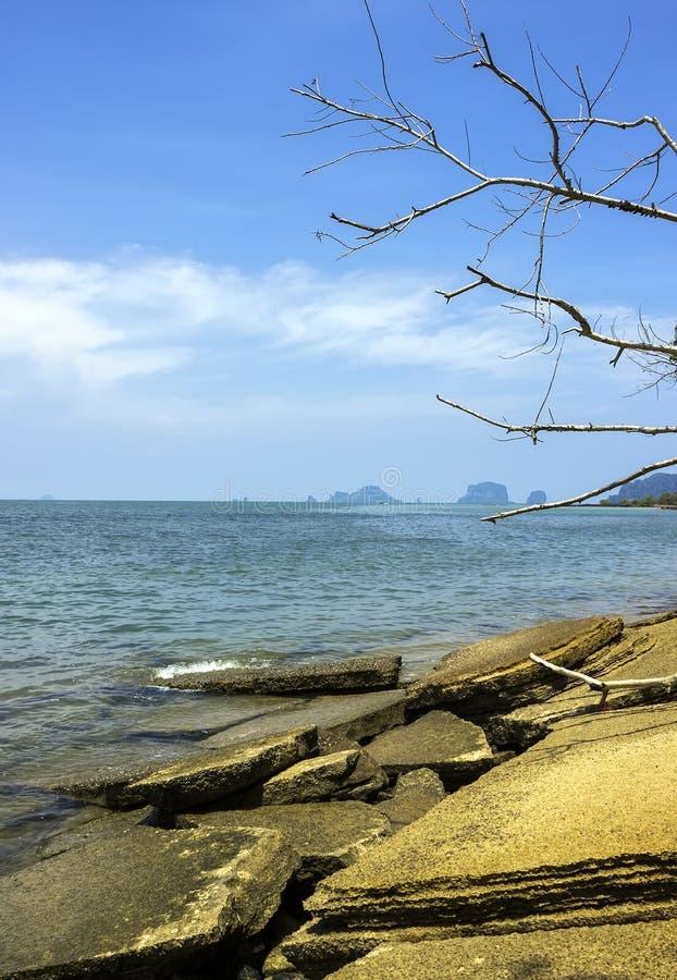 Ископаемый пляж раковины стоковая фотография