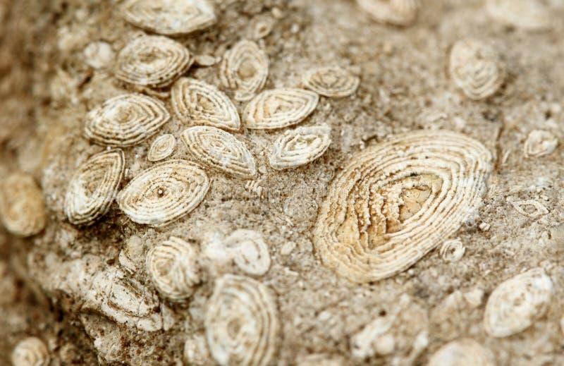 ископаемый стоковые изображения rf