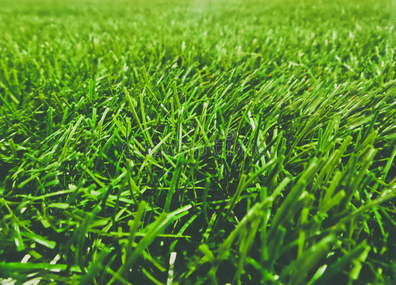 искусственная трава поля стоковые изображения