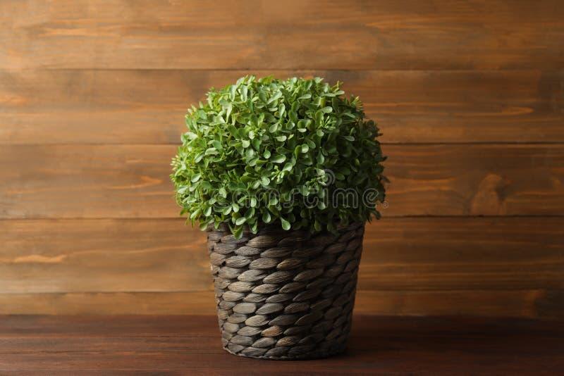 Искусственное растение в плетеном цветочном горшке на столе стоковое фото