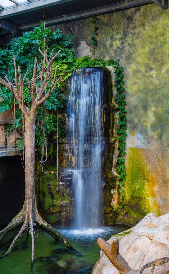 Искусственный зоопарк Омаха Небраска Генри Doorly водопада стоковая фотография rf