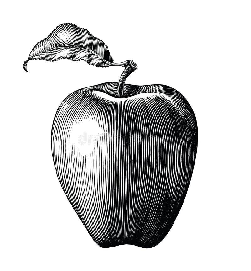 Искусство зажима чертежа плодоовощ Яблока винтажное изолированное на белом backgroun иллюстрация вектора