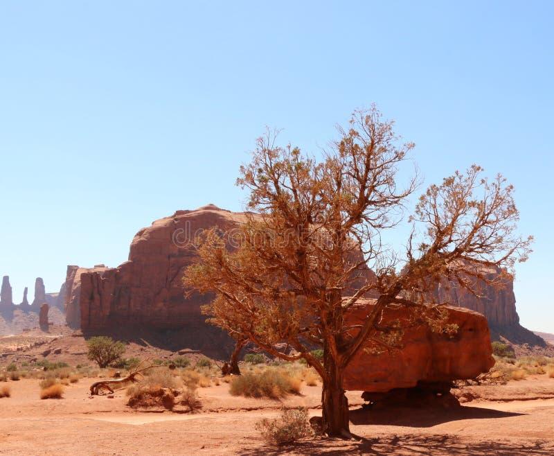 Искусство пустыни стоковые изображения rf