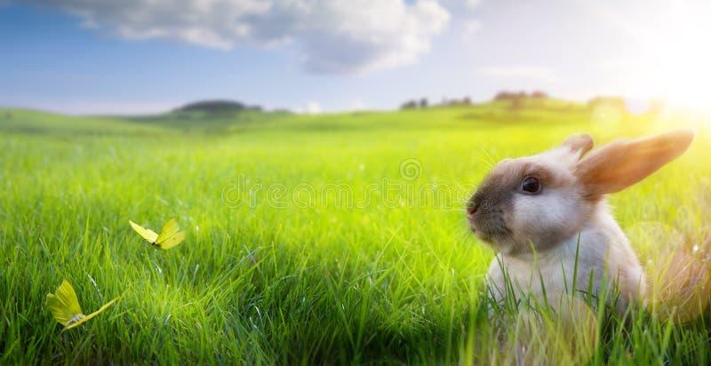 Искусство счастливая пасха; Зайчик пасхи на цветя поле весны стоковые изображения rf
