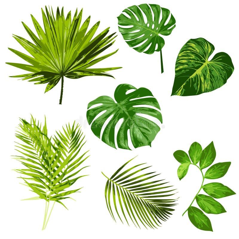 Искусство ClipArt цифров тропического вектора листьев травяное бесплатная иллюстрация