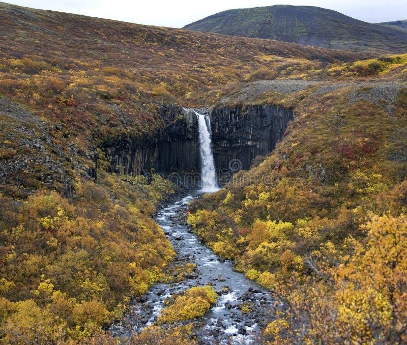 Исландия - водопад Svartifoss стоковое изображение rf