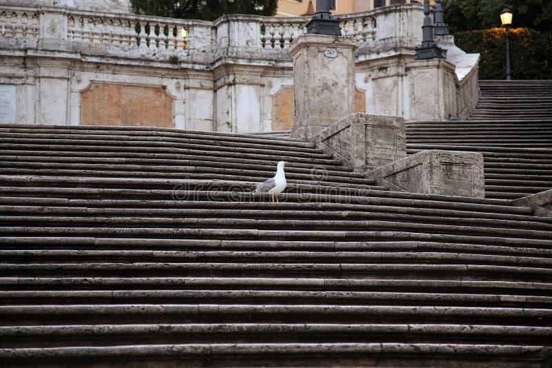 Испанский квадрат с испанскими шагами в Рим Италию стоковые фотографии rf