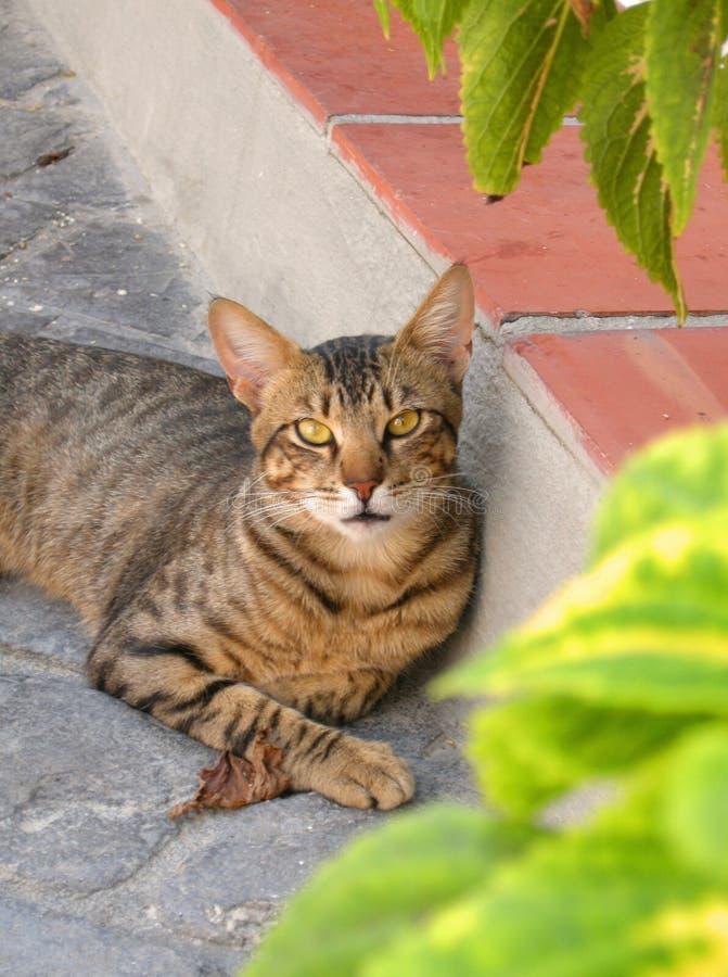 Испанский кот стоковая фотография rf