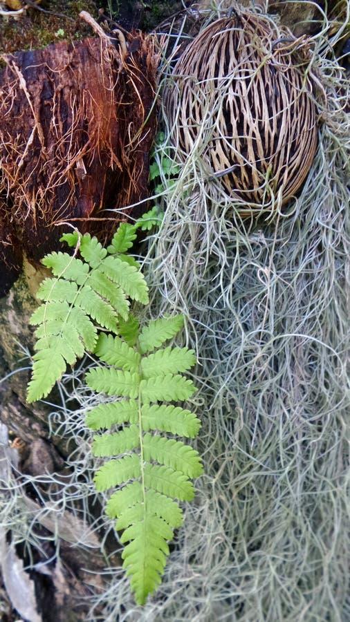 Испанский мох и папоротник в парке стоковое изображение