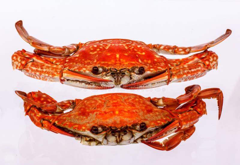 Download 2 испаренный краб моря в блюде Стоковое Изображение - изображение насчитывающей crustacean, сырцово: 37929701