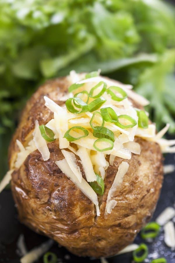 Испеченная картошка заполненная с сыром и луками. стоковое изображение