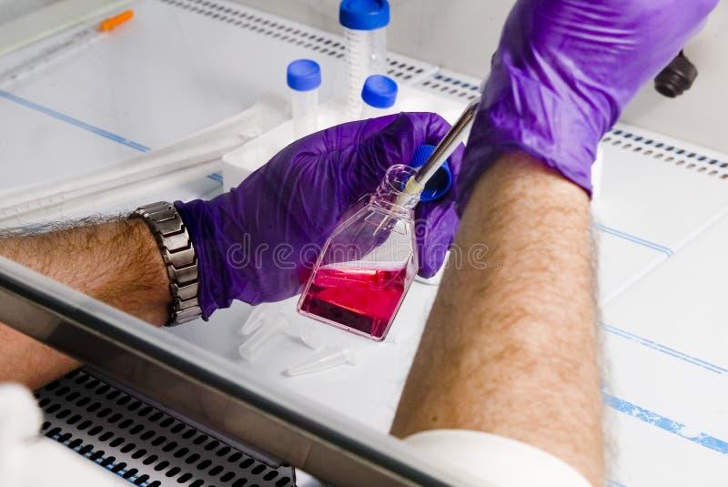 Испытание образца лаборатории больницы стоковое фото rf