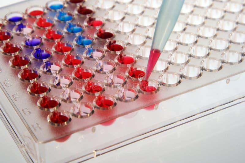 испытание microplates стоковые изображения rf