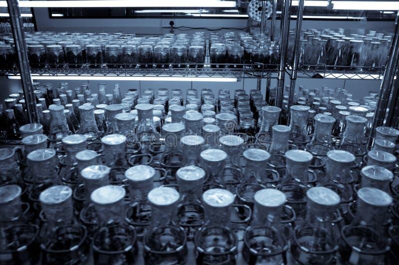 исследование инкубатора научное стоковое фото