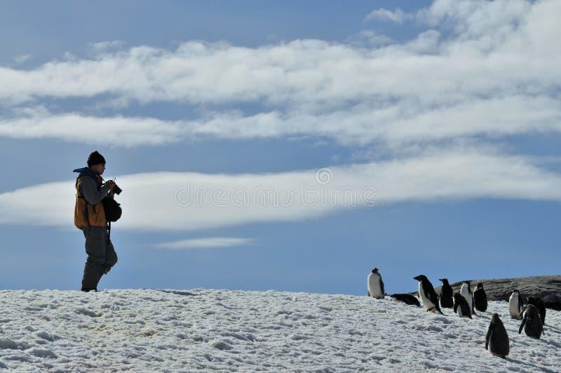 Исследуя Антарктида стоковые изображения rf