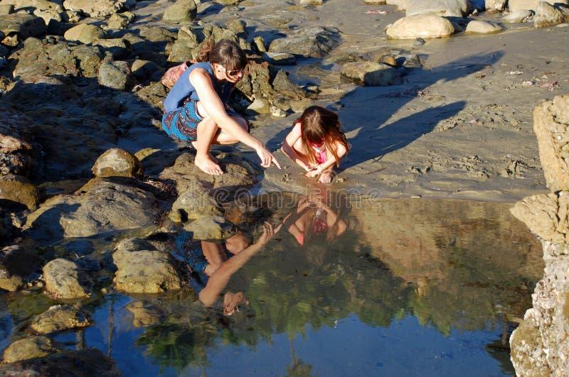 Исследование бассейна прилива около утеса птицы, пляжа Laguna, CA стоковое фото rf