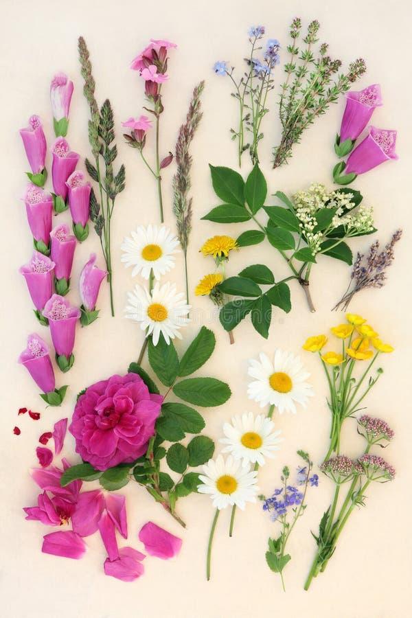 Исследование природы лета флористическое стоковое фото rf