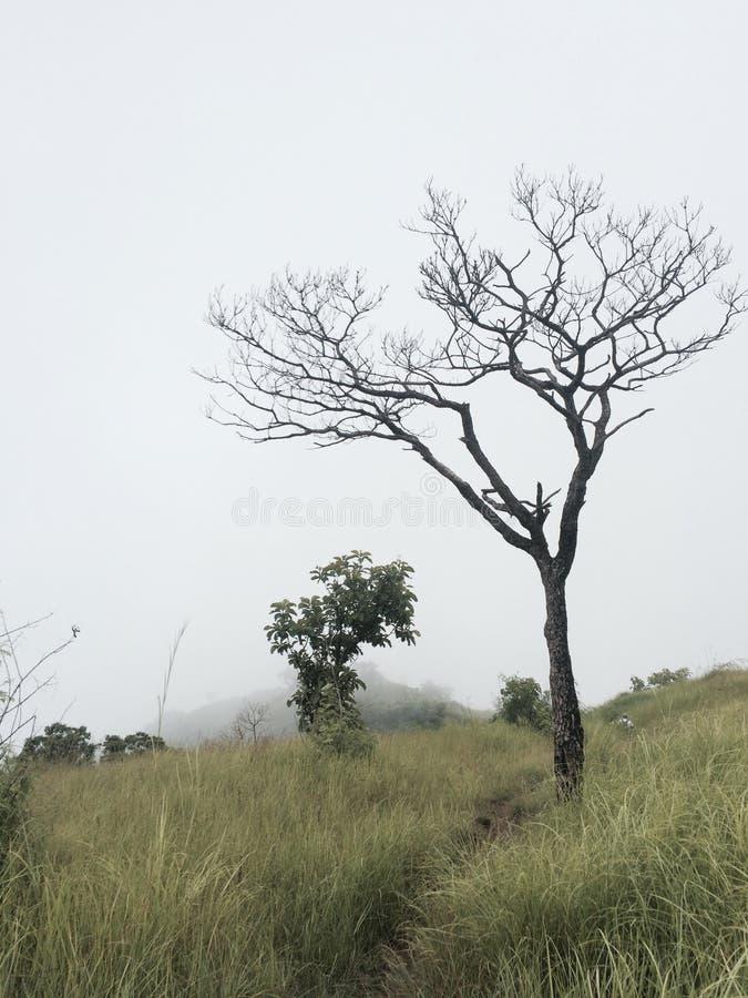 лиственно стоковая фотография